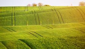 Abstrakte Musterbeschaffenheit von gewellte Felder im Frühjahr rollen Sprin Stockbild