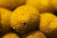 Abstrakte Nahaufnahme der Blume Stockfotos