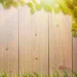 Abstrakte natürliche Hintergründe mit Sommerlaub Stockfotos