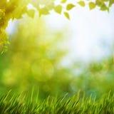 Abstrakte natürliche Hintergründe mit Sommerlaub Stockfoto