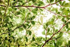 Abstrakte natürliche Hintergründe mit Sonne Licht und bokeh lizenzfreie stockfotografie