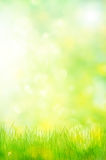 Abstrakte Naturhintergrund-Frühlingsgrüns Stockfoto