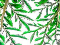 Abstrakte Oberfläche des Grüns lässt Muster auf weißem Hintergrund lizenzfreie stockfotos