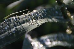 Abstrakte Regentropfen auf Reedblatt Lizenzfreie Stockfotografie