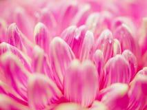 Abstrakte rosa Blumenblätter Stockfotografie