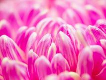 Abstrakte rosa Blumenblätter Lizenzfreies Stockbild