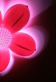 Abstrakte rosafarbene Blumenleuchte gegen schwarzes backgroun Stockfoto