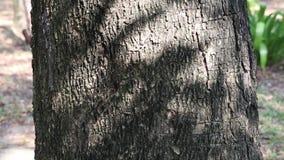 Abstrakte Schönheit in der Natur Schatten von beweglichen Blättern auf der Oberfläche der Baumrinde stock footage