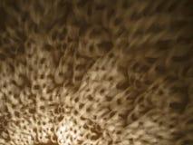 Abstrakte Schatten von einer Deckenleuchte Lizenzfreie Stockfotografie