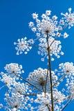 Abstrakte schneebedeckte Blumen auf Hintergrund des blauen Himmels Stockfotografie
