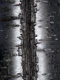Abstrakte silberne Baumrindebeschaffenheit lizenzfreie stockbilder
