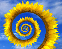 Abstrakte Sonnenblumenspirale Stockbild