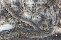 Abstrakte strukturierte dekorative Hintergründe Stockbild