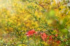 Abstrakte träumerische schöne sonnige Wiese mit Blumenhintergrund Lizenzfreies Stockbild