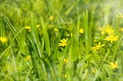 Abstrakte träumerische schöne sonnige Wiese mit Blumenhintergrund Stockfotos