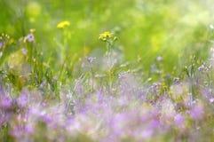 Abstrakte träumerische schöne sonnige Wiese mit Blumenhintergrund Stockbild