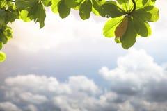 Abstrakte undeutliche Wolke mit Blattrahmen Stockfotos