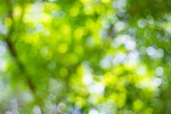 Abstrakte Unschärfe der Natur mit dem bokeh des Lichtes Stockbild