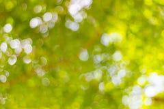 Abstrakte Unschärfe der Natur mit dem bokeh des Lichtes durch die Bäume Stockfotografie
