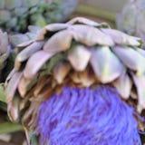 Abstrakte Unschärfe von Artischockenblumen Stockfotos