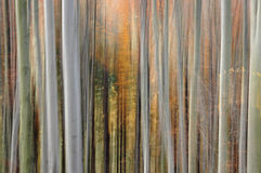 Abstrakte Waldunschärfe stockfotografie