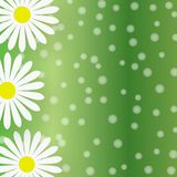 Abstrakte weiße Daisy Flowers im Gradated-Grün-Hintergrund vektor abbildung