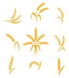 Abstrakte Weizenähreikonen Lizenzfreie Stockbilder