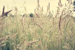 Abstrakte wilde Gräser Stockfoto
