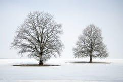 Abstrakte Winterlandschaft mit einem einzigen Baum im weißen Schnee Stockfotografie