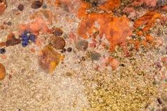 Abstrakte Zusammensetzung mit Mischung des Öls, des Wassers und der Tinte mit Blasen Stockfoto