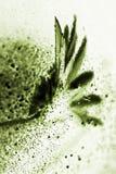 Abstrakte Zusammensetzung mit Trockenblume, Blasen und Licht Stockfotografie