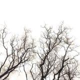 Abstrakte Zweige Stockbild