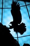 Abstrakter Adler Lizenzfreies Stockbild