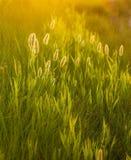 Abstrakter Aufbau mit wildem Gras Lizenzfreies Stockbild