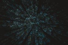 Abstrakter Baum Indonesien lizenzfreie stockbilder