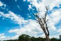 Abstrakter Baum-und blauer Himmel-Hintergrund in der Natur Stockfoto
