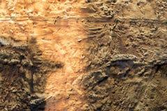 Abstrakter Beschaffenheitshintergrund der Betonmauer stockfotos
