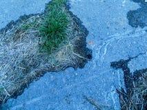 Abstrakter Beschaffenheitshintergrund des grünen Grases aus den schwarzen mystischen Grund Stockfoto