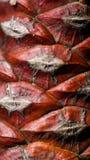 Abstrakter Beschaffenheitshintergrund im Rot Lizenzfreie Stockfotografie