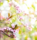 Abstrakter Blumenfrühlingsbaumhintergrund Stockfoto