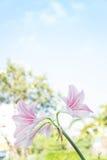 Abstrakter Blumenhintergrund, blühen neue Farbe am Morgen Lizenzfreies Stockbild