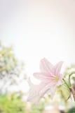 Abstrakter Blumenhintergrund, blühen neue Farbe am Morgen Stockbilder
