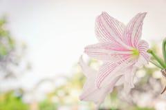 Abstrakter Blumenhintergrund, blühen neue Farbe am Morgen Stockfotos