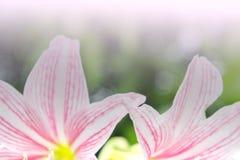 Abstrakter Blumenhintergrund, blühen neue Farbe am Morgen Stockfoto