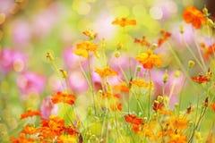 Abstrakter Blumenhintergrund in der Weinleseart mit weichem selektivem Stockfoto