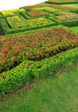 Abstrakter Blumenmusterhintergrund Lizenzfreies Stockfoto