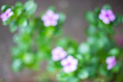 Abstrakter Blumenunschärfehintergrund Lizenzfreie Stockfotos