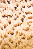 Abstrakter brauner und hellbrauner Beschaffenheitshintergrund Stockbilder