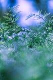 Abstrakter defocused, unscharfer natürlicher grüner mit Blumenhintergrund mit schönem bokeh, Tau auf Gras lizenzfreies stockfoto