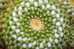 Abstrakter Draufsichthintergrund des Kaktus Stockfotos